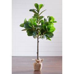 4¼' Fiddle Leaf Fig Tree with Burlap Wrap, GREEN